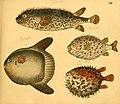 Naturgeschichte in Bildern mit erläuterndem Text (Taf. XIII) (6058656947).jpg