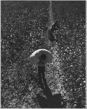 Near Eloy, Pinal County, Arizona. Ten-year-old boy brings in his morning pick to the weighmaster at . . . - NARA - 522239
