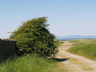 Solway Coast - The track leading to the beach near Mawbray Yard, in the civil parish of Holme St. Cuthbert in the Solway Coast AONB.