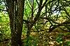 New Munster Bog Island.jpg