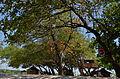 Noon Trees.JPG