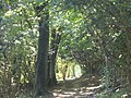 North Downs Way by Ranmore Roundabout - geograph.org.uk - 559404.jpg