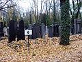 Nový židovský hřbitov (4).jpg