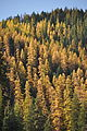 Npnht-lolo-creek-montana-october-2011-rogermpeterson-014 (6819405200).jpg