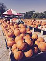 October Pumpkin Stand.jpg