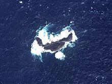 Okinominamiiwa des îles Senkaku.jpg
