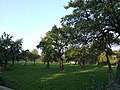 Orchard near Pitstone Green Museum - geograph.org.uk - 991796.jpg