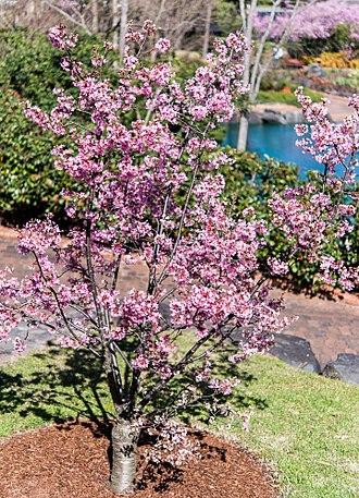 Auburn Botanic Gardens - Image: Ornamentalplant