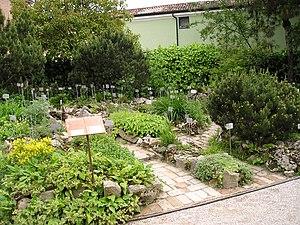 Alpine garden - Alpinum in Orto botanico di Padova, Italy