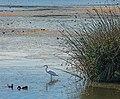 Oso Flaco Lake (15015134174).jpg