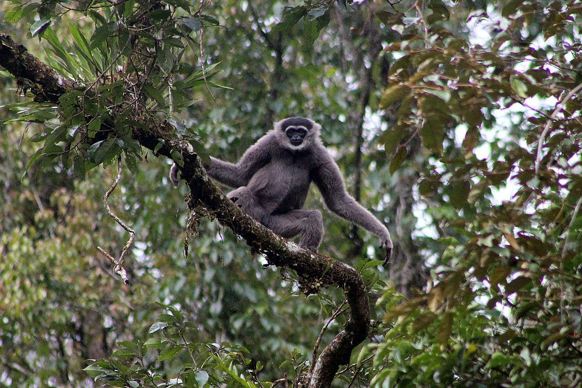 29+ Hewan endemik jawa barat yg hampir punah terupdate