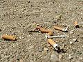 POL Cigarettes 002.JPG