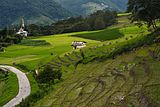 Paddy fields at Ziro, Arunachal Pradesh.jpg