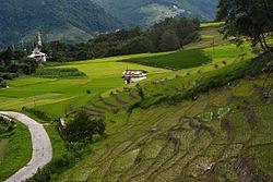 Paddy fields at Ziro, Arunachal Pradesh.jpg