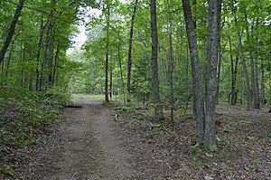 National Register of Historic Places listings in Augusta County, Virginia - Image: Paine Run Road in the woods