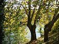 Pamplona - Río Arga desde la calle Errotazar 1.jpg