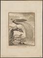 Paradisea apoda - 1700-1880 - Print - Iconographia Zoologica - Special Collections University of Amsterdam - UBA01 IZ15700115.tif