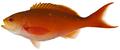 Paranthias furcifer - pone.0010676.g055.png