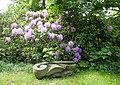 Park ulrychów rododendron.jpg