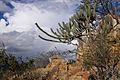Parque Nacional do Catimbau 1.jpg