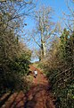 Path, Cockington - geograph.org.uk - 1634716.jpg
