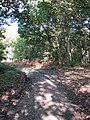 Path to Lord Anson's Wood - geograph.org.uk - 1028282.jpg