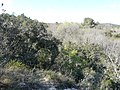 Paysage au sud du zoo de Lunaret (2363302673).jpg
