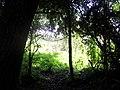 Pequeno bosque - panoramio.jpg