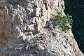 Peregrine falcon (Falco peregrinus) and four chicks (ed4d091b-79a4-4752-be96-589ad25c39c7).jpg