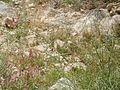 Peres river flora.JPG