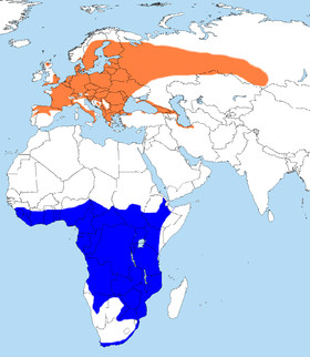 Orange: Summer rangeBlue: Breeding/winter range of honey buzzard.