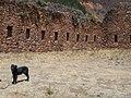 Perrito en el sitio arqueológico.jpg