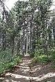 Persephone Nature Trail, Troodos, Cyprus - panoramio (9).jpg