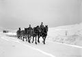 Pferdepflug beim Schneeräumen - CH-BAR - 3238003.tif