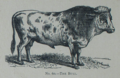 Picture Natural History - No 60 - The Bull.png