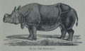 Picture Natural History - No 75 - The Rhinoceros.png