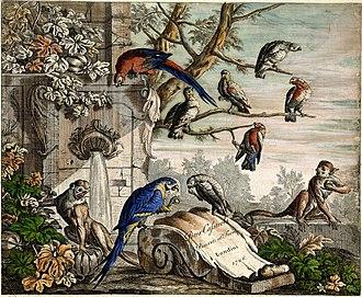 Pieter Casteels III - Set of 12 Bird Scenes – Plate 1