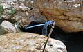 PikiWiki Israel 43280 Wildlife and Plants of Israel.JPG