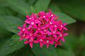Pink Flowers @ Botanical Gardens (1915056985).jpg