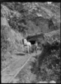 Pit pony pulling a wagon from a coal mine. ATLIB 290624.png