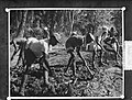Plaatjes uit Nieuw Guinea , wegbouw Dojo glasnegatife, Bestanddeelnr 906-8657.jpg