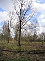 Plantation of Willows - geograph.org.uk - 122463.jpg