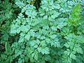 PlanteA-2.jpg