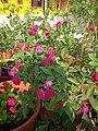 Plants at Bijalinagar 31.jpg