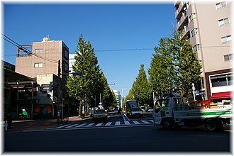 Shirokanedai - Gaien Nishi-dori, popularly known as Platinum Street
