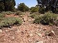 Poa fendleriana habitat (6244152034).jpg