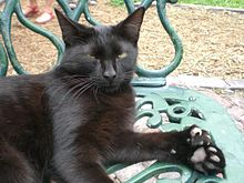 A black cat sitting on a garden chair. Its left front paw faces up, displaying its seven toes.