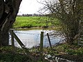 Pond in pasture - geograph.org.uk - 1219290.jpg