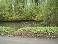 Pond with hardy Mallards - geograph.org.uk - 1576539.jpg
