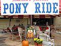 Pony Ride (50273721).jpg